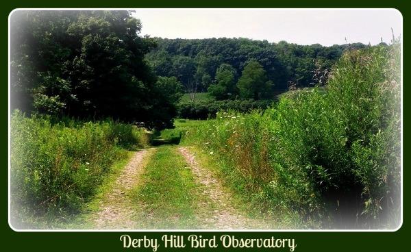 Derby Hill 1