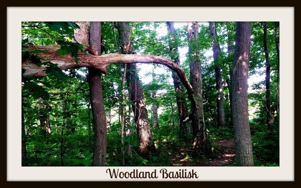 Woodland Basilisk